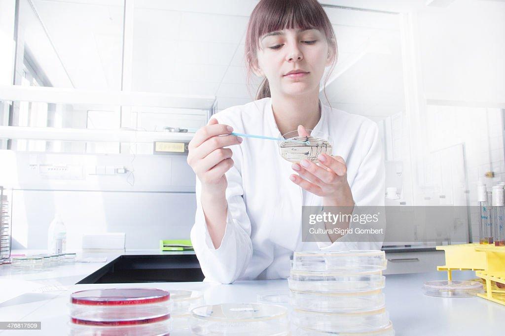 Scientist testing strip in lab : Stock-Foto