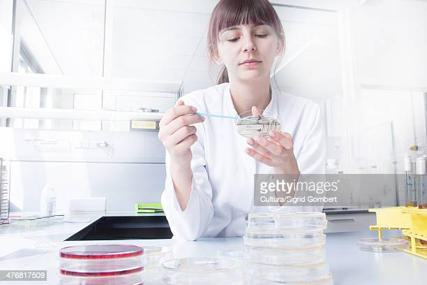 scientist testing strip in lab - sigrid gombert stock-fotos und bilder