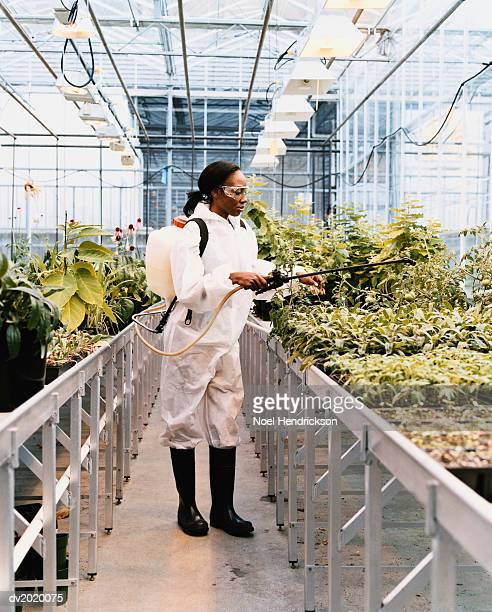 Scientist Treating Plants with Pesticide in a Greenhouse