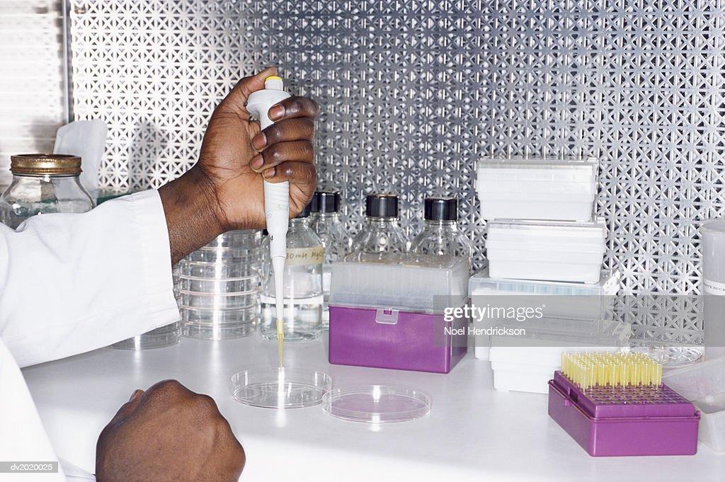 Scientist Using a Syringe to Dispense Liquid into a Petri Dish : Stock Photo