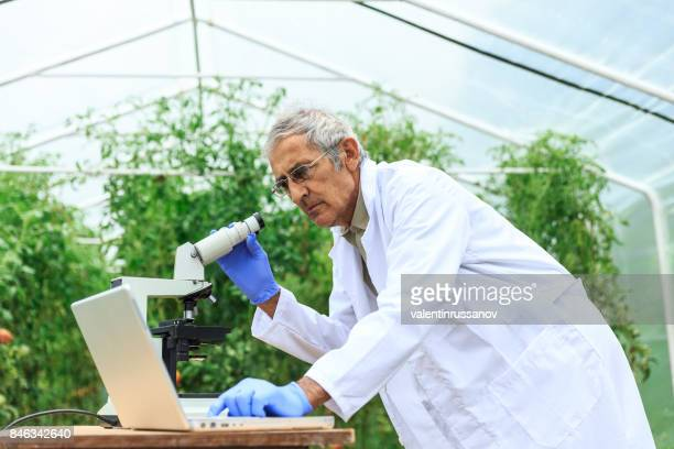 scientist using microscope for observing plant status - agronomist stock pictures, royalty-free photos & images
