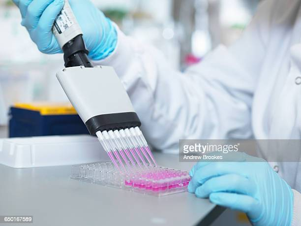 Scientist using multi-channel pipette to fill multiwell plate for analysis of antibodies by ELISA assay, Jenner Institute, Oxford University