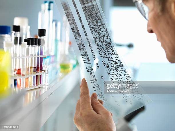 Scientist viewing a DNA sequence gel to understand the genetic information of a human in a laboratory