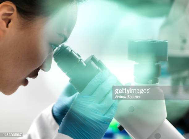 scientist viewing sample through microscope during experiment in laboratory - microscope stock pictures, royalty-free photos & images