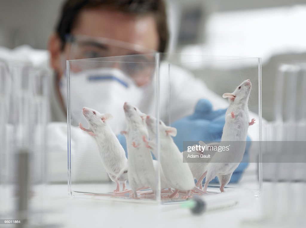 Scientist watching mice in laboratory : Stock Photo