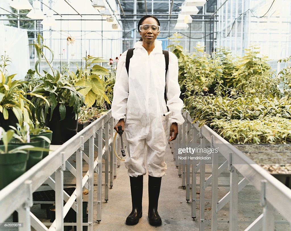 Scientist Wearing Protective Clothing Standing in a Greenhouse : Stock Photo