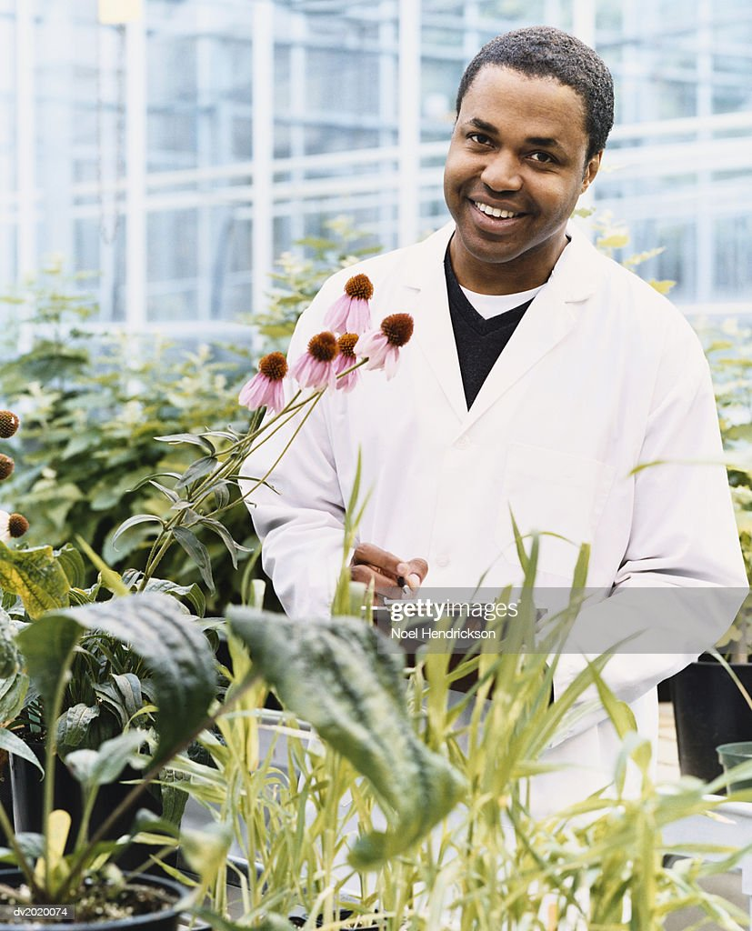 Scientist With a Clipboard Observing Plants in a Greenhouse : Stock Photo