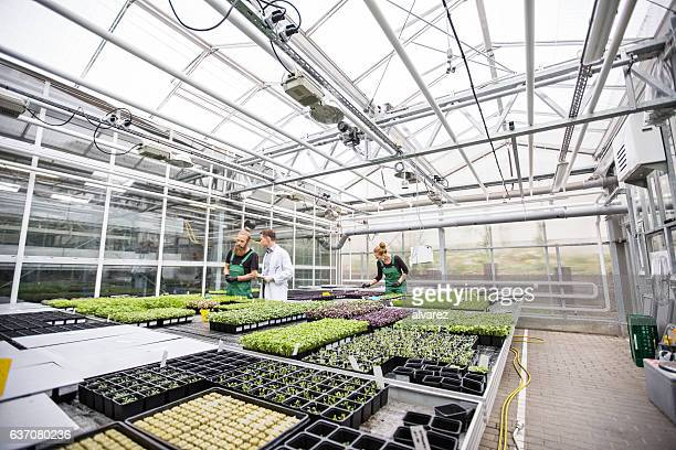 scientist with farm workers working in garden center - botany stock pictures, royalty-free photos & images