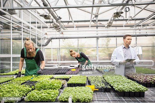 Scientist with farm workers working in greenhouse