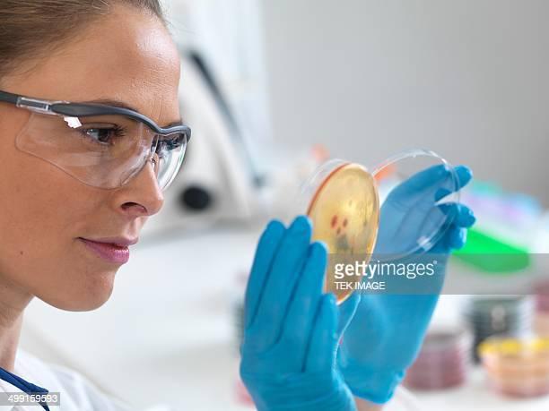 Scientist with petri dish