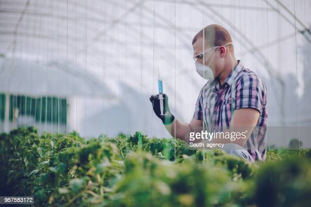 scientist working on farm - microbiologist stock pictures, royalty-free photos & images