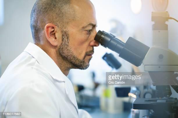 scientist working with microscope - cris cantón photography fotografías e imágenes de stock
