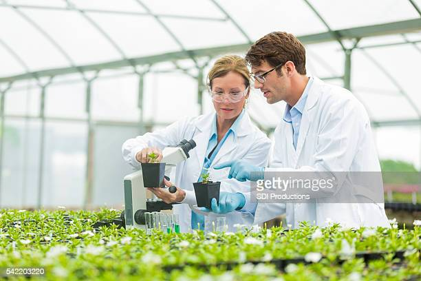 Scientists discussing botany
