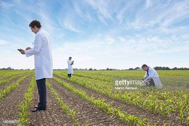 scientists examining crops in field - laboratory coat stock photos and pictures