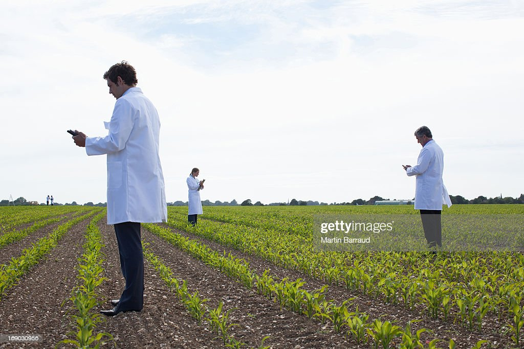 Scientists examining crops in field : Stock Photo
