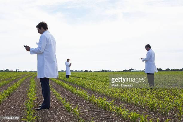 Scientists examining crops in field