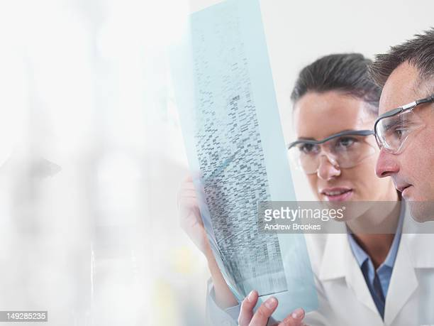 scientists examining dna print out - geneticist stock pictures, royalty-free photos & images
