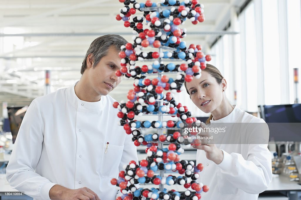 Scientists examining molecular model in lab : Stock Photo