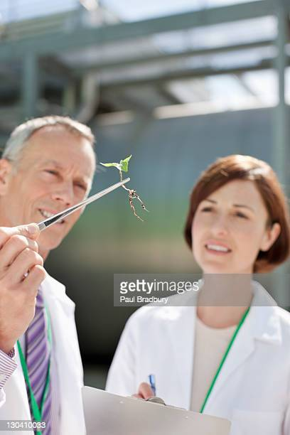 Scientists examining plants outdoors