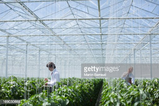Scientists examining produce in greenhouse