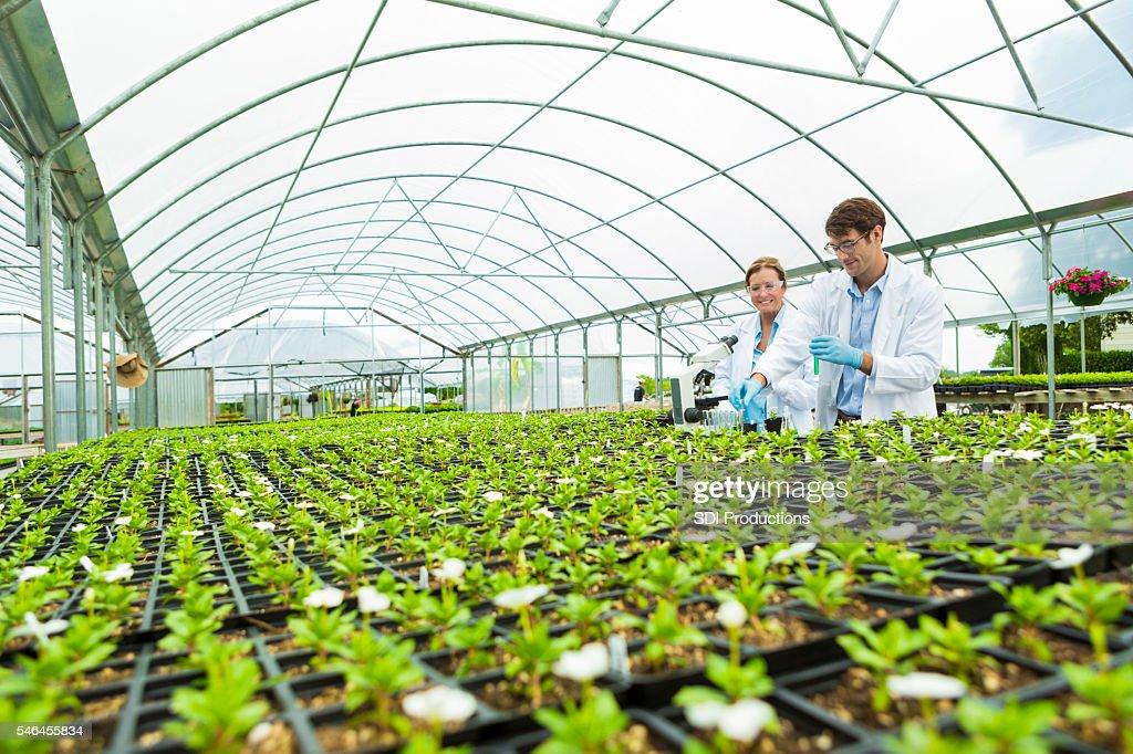 Scientists greenhouse laboratory : Stock Photo
