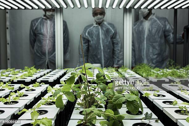 Scientists look at vegetables growing in an experimental greenhouse at the Lyon's Urban Farm on October 20 on the INSA campus in Villeurbanne / AFP /...