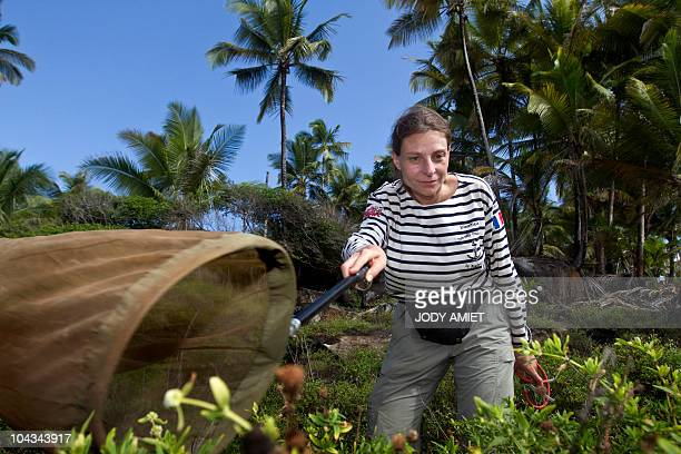 Scientists of the TerreOcean mission Adeline SoulierPerkins collects insects on February 13 on the Devil's Island in the Caribbean Sea off French...