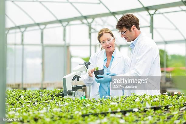 科学調査する地元の植物