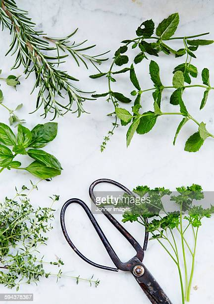 Scissors and herbs on marble background