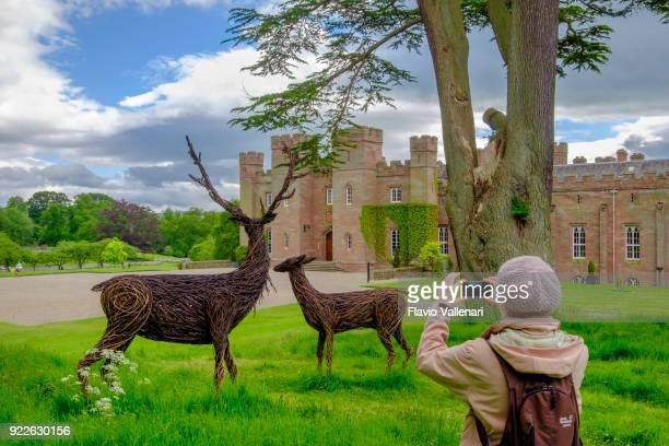 palácio de scone, escócia - salgueiro - fotografias e filmes do acervo