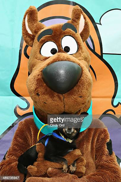 ScoobyDoo holds an adoptable dog at the North Shore Animal League America's 2014 Tour For Life mobile adoption event Muttigrees Pack Party at Union...