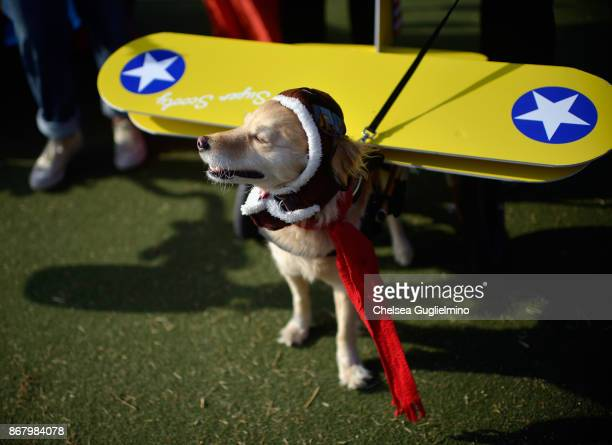 Scooty dressed as a pilot attends Haute Dog Howl'oween Parade on October 29 2017 in Long Beach California