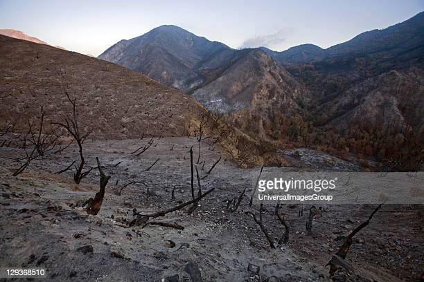 Scorched earth and burnt trees along Big Tujunga Canyon road from Station fire in September 2009 San Gabriel Mountains Angeles National Forest Los...