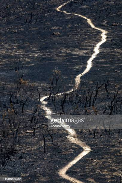 scorched earth with dirt walking track, path through burnt landscape after bushfire, forest fire, australia - australia fire stock pictures, royalty-free photos & images
