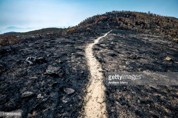 scorched earth with dirt walking track, path through burnt landscape after bushfire, forest fire, australia - land feature stock pictures, royalty-free photos & images