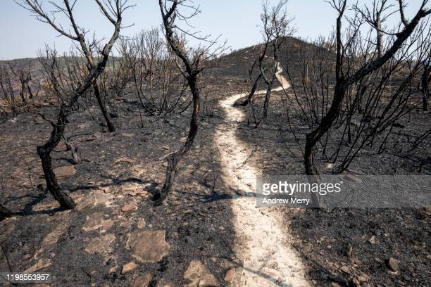 scorched earth with dirt walking track, path through burnt landscape after bushfire, forest fire, australia - climate stock pictures, royalty-free photos & images