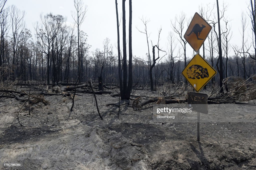 Australia Braces to Relive Its Hotter Than Hell Wildfire Nightmare : ニュース写真