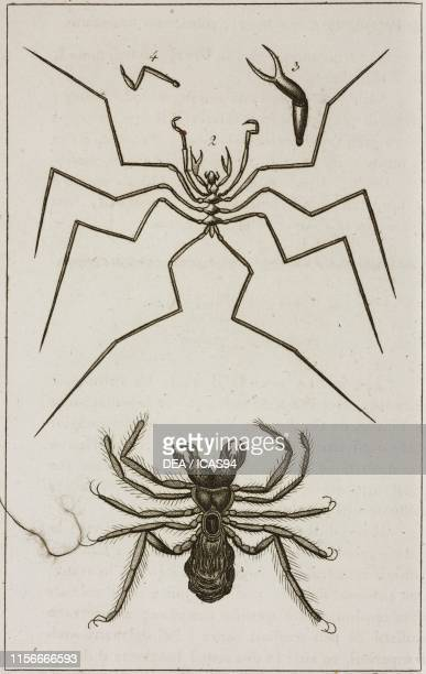 1 Scorpion spider 2 Ninfone giossipede 34 Chelicera and pedipalp of the Ninfone giossipede engraving by Dala from Le opere di Buffon by GeorgesLouis...
