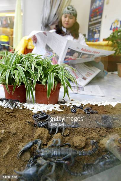 Scorpions share a glass room with Nur Malena Hassan nicknamed the Scorpion Queen as she reads a newspaper in the eastern town of Kuantan 31 August...
