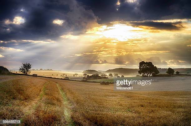 UK, Scotland, East Lothian, harvested fields