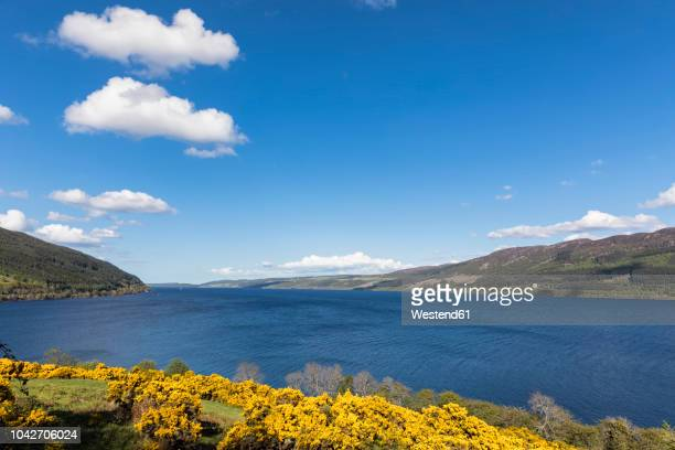 uk, scotland, loch ness, drumnadrochit - drumnadrochit stock pictures, royalty-free photos & images