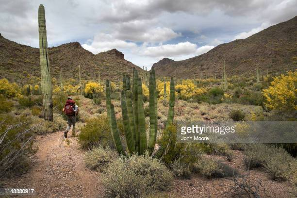 Scott Warren a volunteer for the humanitarian aid organization No More Deaths walks into the Organ Pipe Cactus National Monument to deliver food and...