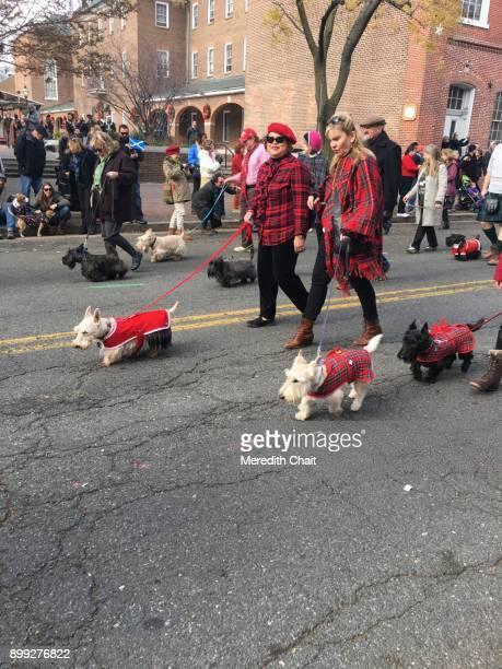Scotties on Parade