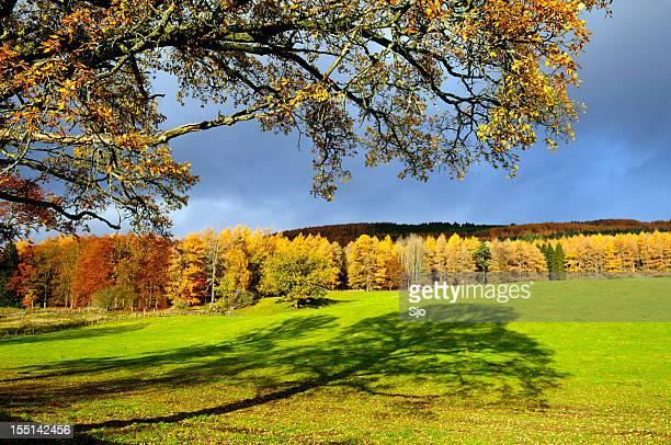 Escocês árvores de outono