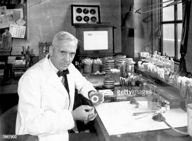 Scottish bacteriologist Sir Alexander Fleming in his laboratory at St Mary's Hospital in Paddington London 2nd October 1943