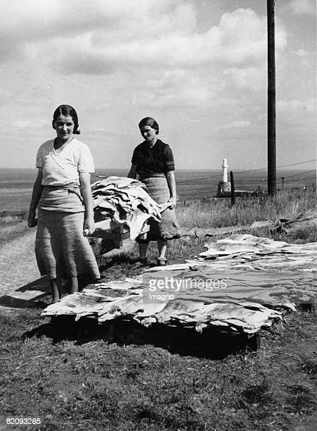 Scottish fischergirls from Aberdeen bringing fish to dry on the air The fish will be exported to the continent and to SouthAmerica Photograph England...