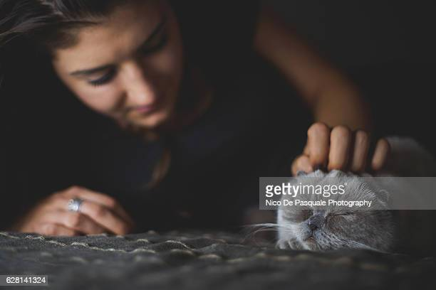 scottish fold kitten - nico de pasquale photography stock pictures, royalty-free photos & images