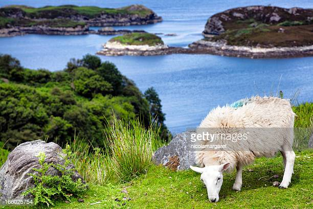Scottish Highlands: Drumbeg viewpoint, Assynt coastal road