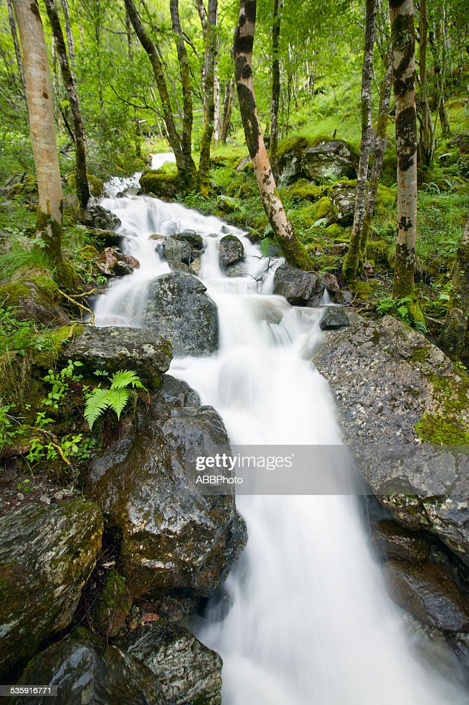 Scottish landscape with wet forest and waterfall : Stock Photo