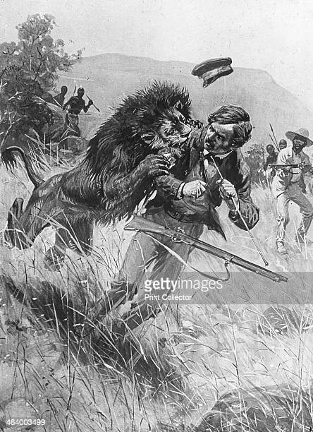 Scottish missionary and explorer David Livingstone being attacked by a lion Africa 19th century Livingstone was the first European to discover the...